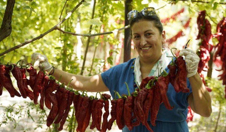SLOW FOOD ANTAKYA BİBER HASADINA KATILDI.